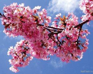 Îmi promit ca în această primăvară să văd pomii înflorind