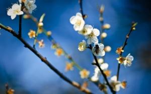 poze-flori-primavara[1]